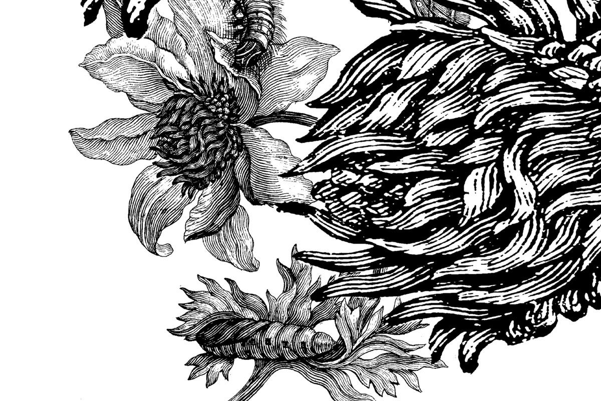 Black Flowers / Seriegrafien und Collagen